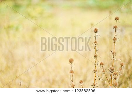 Grass, flowers  nature background in chonburi Thailand