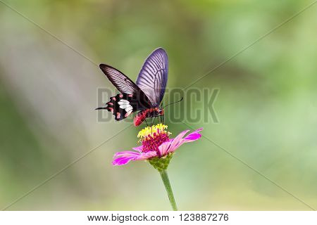 Flowers with butterflies at garden chonburi  thailand