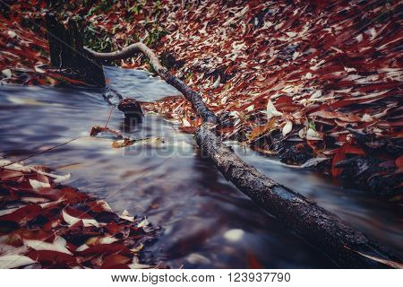 Snag in a forest stream in autumn