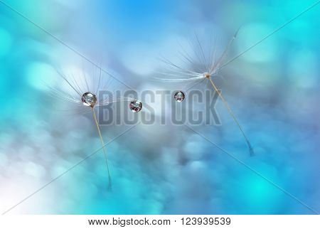 Dandelions with  Waterdrops on Colorful  Blue Background...