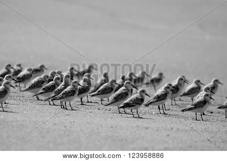 Flock of birds on the shores of the beach