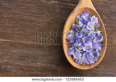 pale blue flower petals plants Persian speedwell in a wooden spoon on old wooden board in the cracks close up. aromatherapy herbal tea homeopathic medicine. Free space for text. Copy space