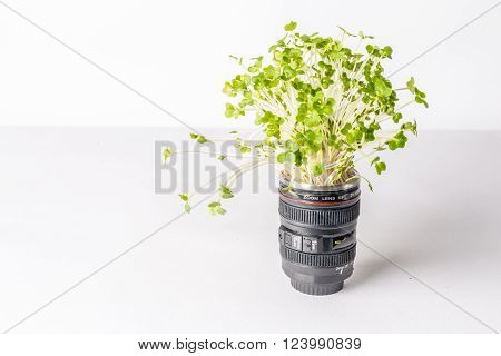 Green plant in a camera lens signifying growth and development of a photography business