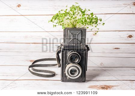Green plant in a vintage camera signifying growth and development of a photography business