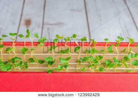 Green plants growing in books signifying knowledge wisdom learning and new ideas