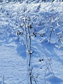 Twigs with frozen buds (in the early spring or at the end of winter) poster