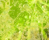 Bright Green Floral Grunge Textured Abstract Background poster