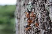 Group of working ant close up on the tree poster