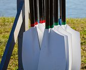 Rowing oars hung in a stand and ready for the regatta poster