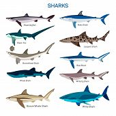 Shark fish vector set in flat style design. Different kind of sharks species icons collection. Isolated on white background. poster