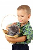 Little boy who pet a gray kitty in wicker isolated on white poster