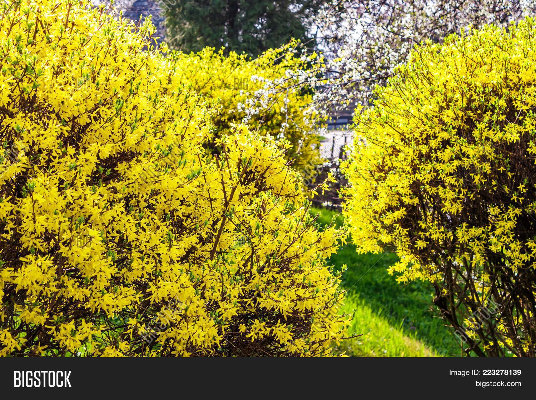 Yellow Flowers Image Photo Free Trial Bigstock