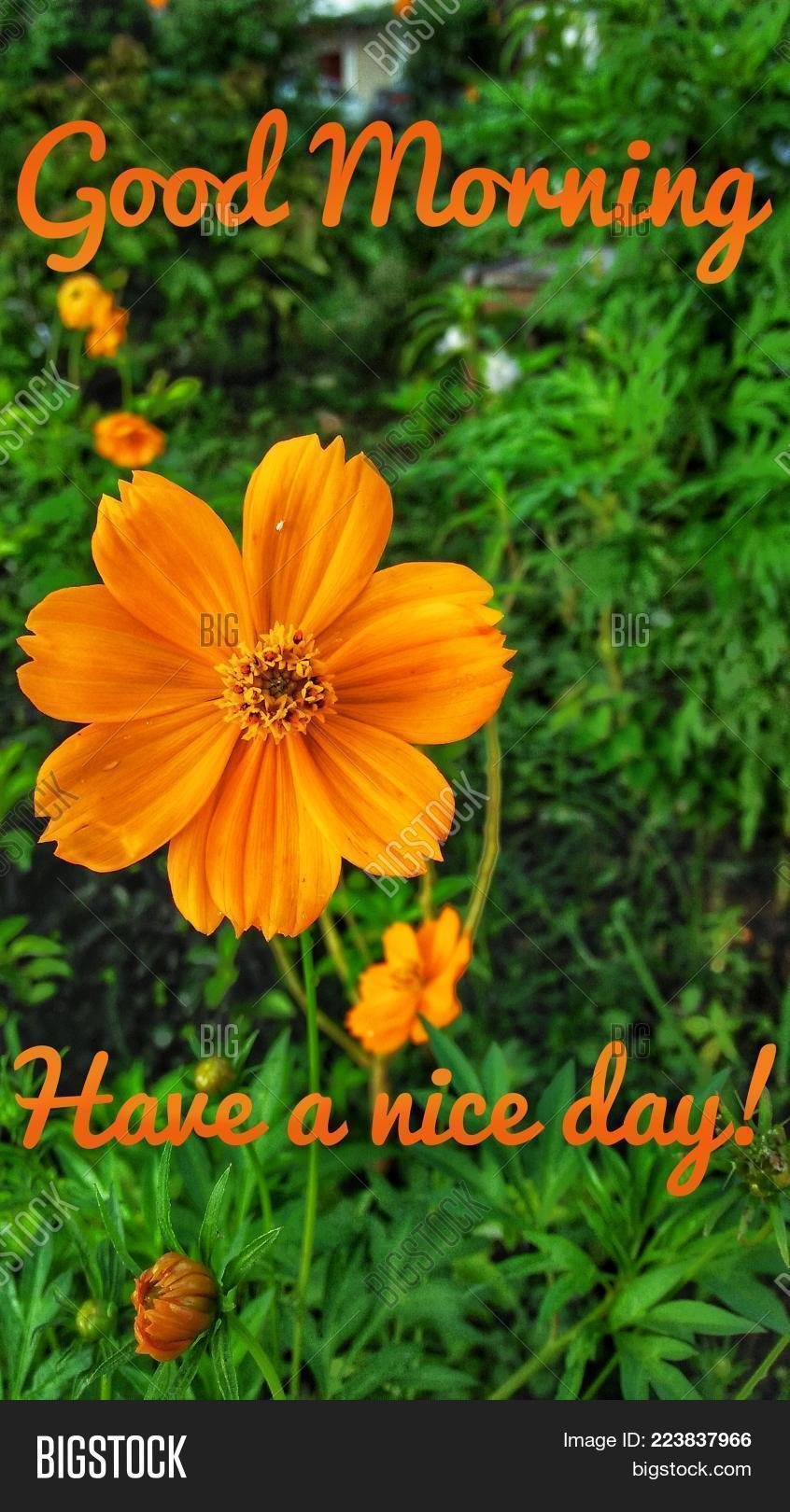 Greeting Quote Good Image Photo Free Trial Bigstock