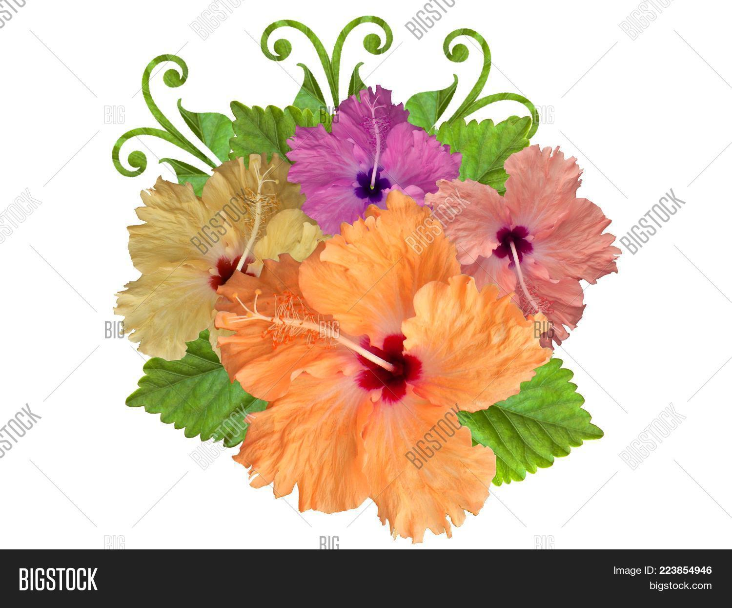 Hibiscus Flowers Image Photo Free Trial Bigstock