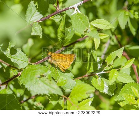 small orange colored butterfly in sunny natural ambiance