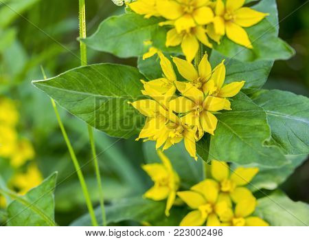 closeup shot of some yellow flowers in natural green ambiance