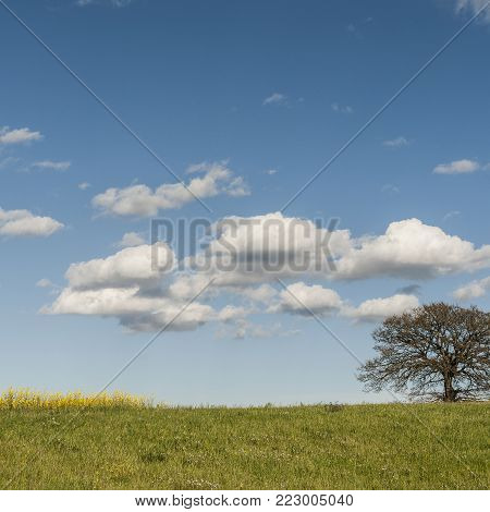 Italian landscape with meadows early in the spring. Agriculture in Italy, fields, pastures and solitary tree