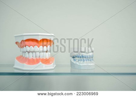 Plastic human teeth models and dental model of teeth (casts of the jaw) on a glass shelf, light colors