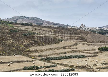 Rural landscape with vineyards and stubble fields on the hills of maltese island Gozo.