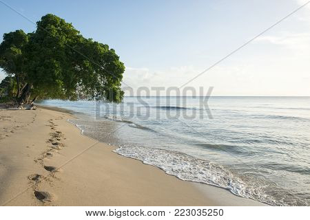 Scenic island oceanside with trees and blue skies