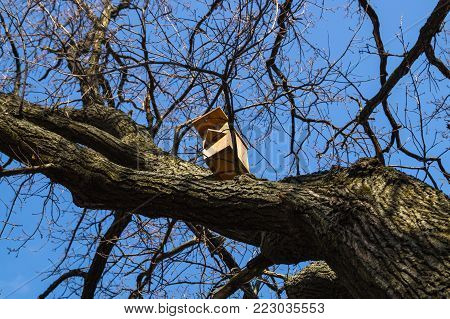 Birdhouse on the bare branches lit by sunlight on the background of bright blue sky in early spring.