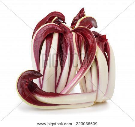 Radicchio, red Treviso chicory isolated on white