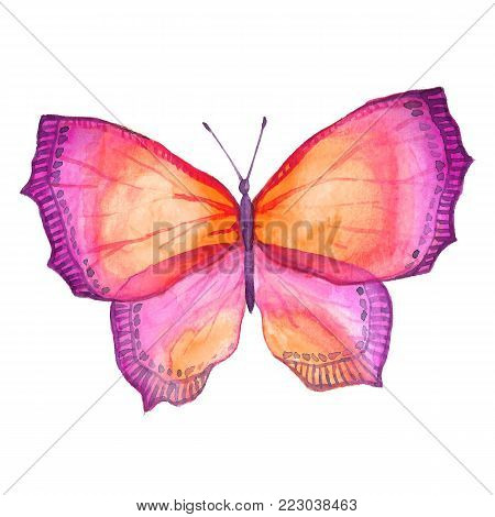 Watercolor Image Of A Butterfly On A White Background.