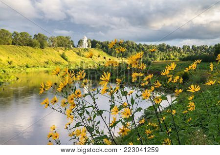 Cheerful yellow flowers on the picturesque Volga riverside, summer landscape in Rzhev town, Russian backwoods.