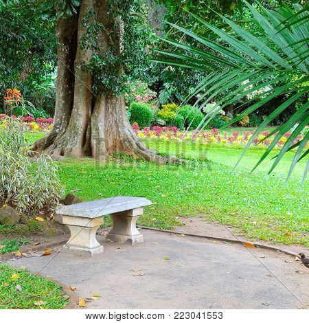 Beautiful tropical park with trees and flowers. In a secluded place is a stone bench for rest.