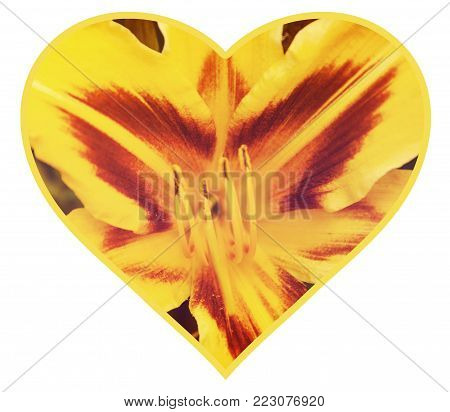 Isolated summer flowers floral heart concept for Valentine's day. Yellow tiger Lily