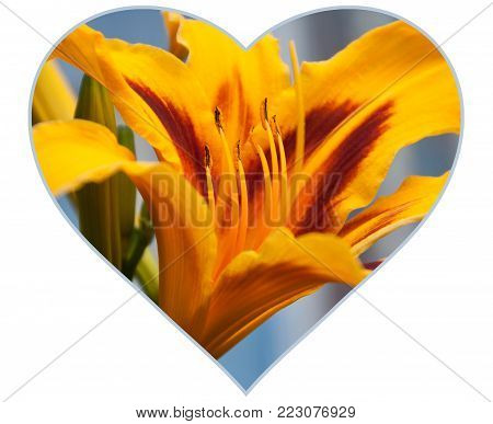 Isolated summer flowers floral heart concept for Valentine's day. Yellow tiger Lily on blurred background