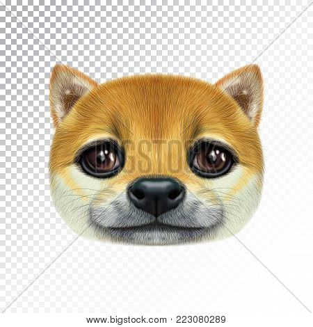 Vector Illustrated portrait of Shiba Inu Dog. Cute head of sable domestic dog for print on pillow.