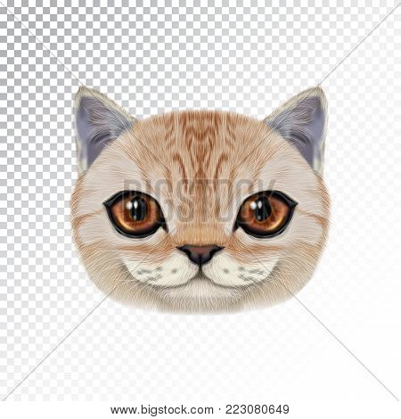 Vector illustration portrait of domestic cat. Cute realistic face of caramel color cat for print on pillow.