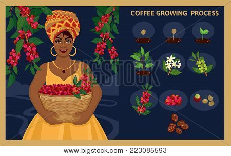 African woman with a basket harvests arabica coffee berries. Plant seed germination stages. Process of planting and growing a coffee tree. Coffee tree cultivation in stages. Vector illustration