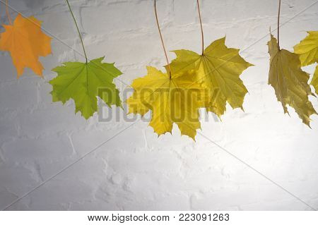 a few autumn leaves on a branch on a blurred background of a city park