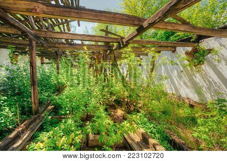 Consequences Of The Nuclear ontamination In Evacuated Rural Area After Chernobyl Disaster. The Overgrown Ruins Of Abandoned House.