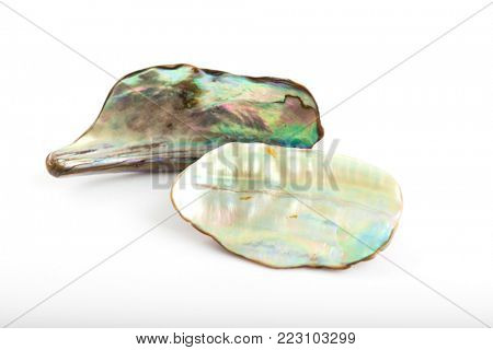 Shining mother of pearl on white background.