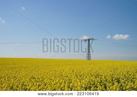 Yellow Rape Field And High-voltage Power Lines. Blue Sky With Clouds.