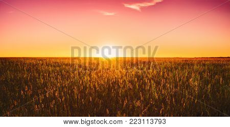 Panorama Of Meadow Grass In Yellow Sunlight At Later Summer Or Early Autumn Season On Bright Sun At Horizon On Background. Sunset Sunrise Sky Over Field Meadow Grass. Warm Colors. Panorama