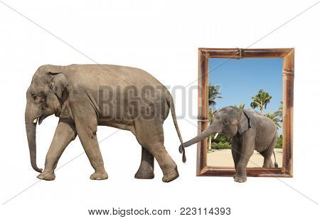 Family of elephant - mom and baby (Elephas maximus) in bamboo frame  Small elephant is held by the trunk by the tail of his mother. Isolated on white background