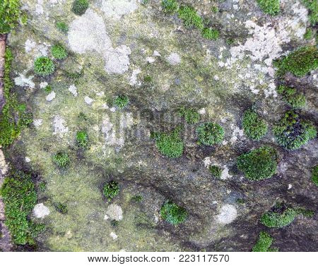 grey stone with moss and lichen growing on the rough surface