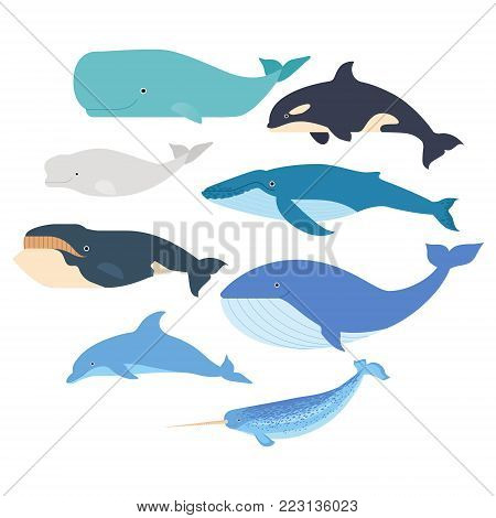 Whales and dolphin set. Marine mammals illustration. Narwhal, blue whale, dolphin, beluga whale, humpback whale, and sperm whale vector on white isolated