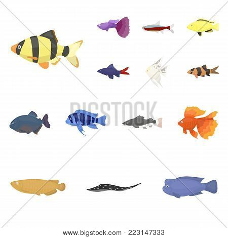 Different types of fish cartoon icons in set collection for design. Marine and aquarium fish vector symbol stock illustration.