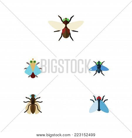 Icon flat buzz set of mosquito, bluebottle, tiny and other vector objects. Also includes bluebottle, gnat, dung elements.