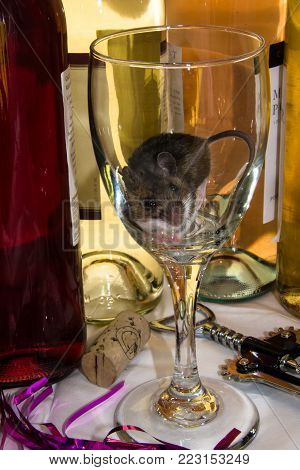 A brown house mouse, Mus musculus, in a clear long stemmed wine glass after a party. Bottles are in the background with a cork, corkscrew and party favors in the foreground.