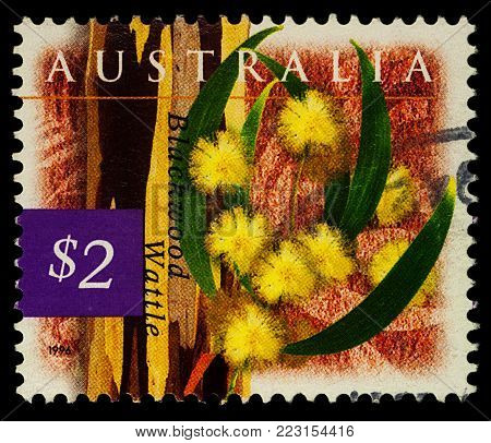 Moscow, Russia - January 22, 2018: A stamp printed in Australia shows Blackwood wattle flowers (Acacia melanoxylon), series
