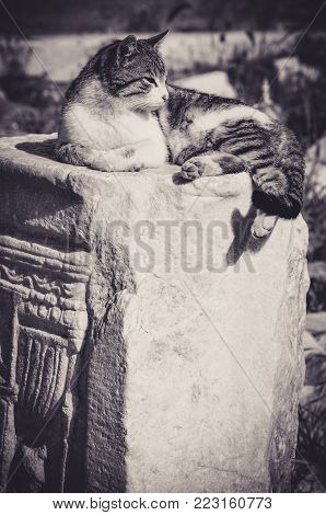 Cat Sleeping on a Column Pedestal in Turkey