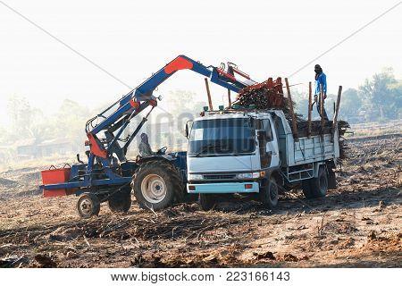 sugarcane truck transportation harvest in the plantation