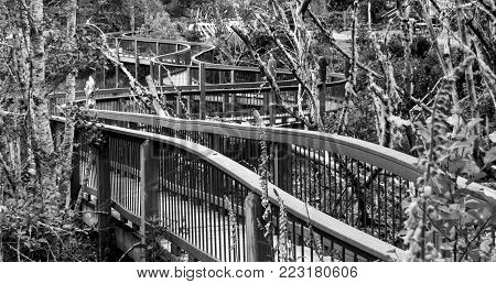 Black and white twisty boardwalk through a delta inlet in the winter