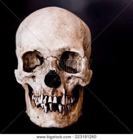 Fiberglass human skull facing the camera on a black background.